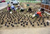 Bepflanzung Aussenanlage - 2010